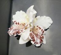 2014 Frozen Headband Hairpin Hair Accessories Wedding Bridal Headdress Head Flower Corsage Popular Europe And Amerifloral Adult