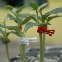 100pcs Good Quality Plant Grafting Clips Tomato Flower Gardening Engraft Durable Vegetable Vine Watermelon Grape Plastic Clip