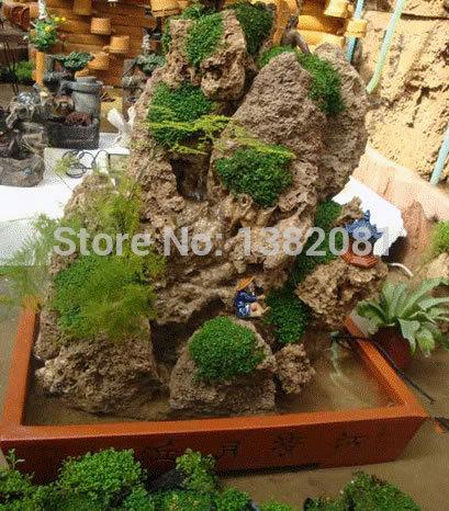 Live Rock Plants Seed Rocks Bonsai Plants