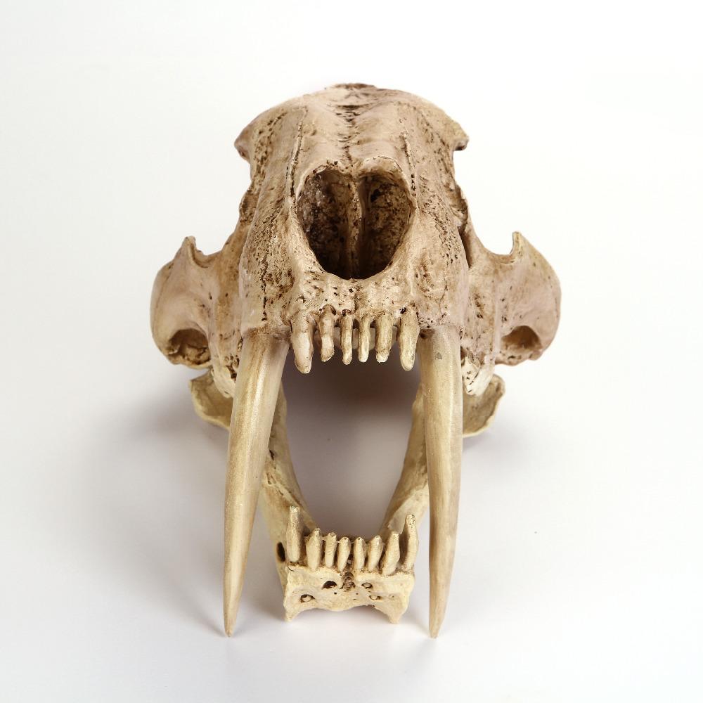 New-Saber-Tooth-Cat-Tiger-Skull-Resin-Sa