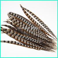 Ringneck Pheasant Tail Feather,50-55CM 5pcs/lot Reeves Pheasant Tail Feathers,Pheasant Tail Feather