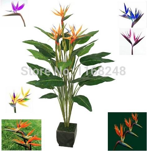 20pcs/lot ave do paraíso, strelitzia flor de semente semente houseplant aves exóticas do paraíso sementes de flores raras, muitas variedades(China (Mainland))