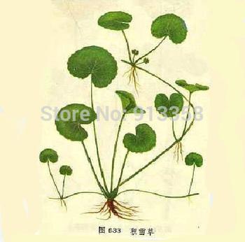 Бесплатная доставка гуанси дикий китайский травяных лекарств сухой подкова трава ...