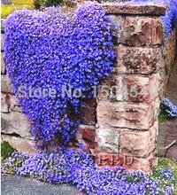 Grátis frete 50 + perene floração GROUNDCOVER sementes - rocha Cress - azul brilhante(China (Mainland))