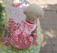 New lovely pet dot skirt spring/summer dog clothing free shipping