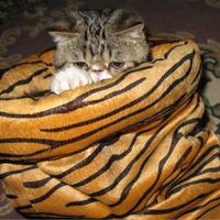 Cat Tunnel,Cat toy,Cat litter,cat sleeping bag
