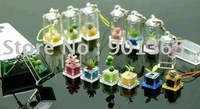 Funny Pet Plant Mini Plant,Can Flower,Real Tree,Fancy Pet Tree Cell Phone Strap Bag Accessories 50pcs/lot