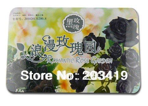creatief cadeau mini huisdier planten bonsai pot fantastische bloemen rozen met meerdere kleuren availabe groothandel detailhandel