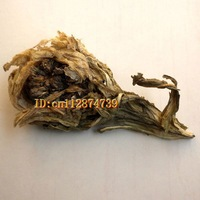 Special offer! Sale! 10 pcs Wild Snow Lotus Flower/ Saussurea /Queen of Herb Health Care Free Shipping