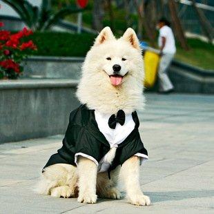 big dog tuxedo striped large dog formal wedding suit bridegroom wear golden retriever party clothes(China (Mainland))
