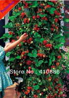 200 pcs climbing strawberry seeds free shipping by China Post Air Mail !