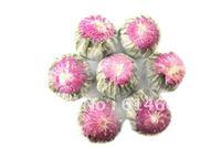 10pcs blooming Arabian jasmine flower Artistic Blossom Flower Tea ,Free shipping
