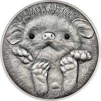 Mongolia 2012 500 togrog Long-eared Hedgehog - Hemiechinus auritus UNC Silver Co