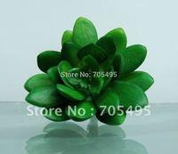 Free Shipping 4.5cm Artificial Echeveria Bare Pick Succulent Plant Picks