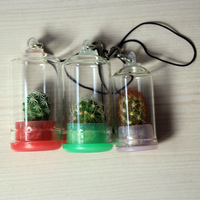 10pcs/lot,Plant Keychain Real Cactus In-a-Bottle Keyring,An amazing gift for Lovers,Free Shipping!
