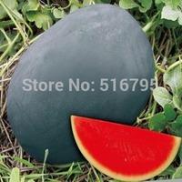 50 PCS Fruit  seed ,watermelon seeds ,Garden supplies Bonsai Black Beauty melon