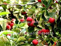 Hawthorn fruit tea/healthy tea/Herbal tea,helps digestion, fat-dissolving,200g