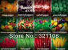 12 KINDS 1200+seeds  different varieties of pepper seeds of vegetables, non-gmo vegetable seeds, free shipping!
