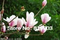 Hermetic Magnolia soulangeana Soul tree seeds spring bloom 100 pcs white and purple