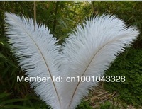 "wholesale 10pcs/lot 12-14"" White and Black Ostrich Feather Plume FREE SHIPPING wedding decoration"