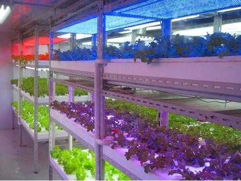 14w cresce a luz , tira bar crescer ight , IP65 luz crescer impermeável para hydropoics / estufa / jardim interior(China (Mainland))