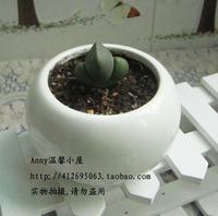 Black and white ceramic flower pot vase decoration fleshier plant ball bonsai
