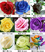 FREE SHIPPING 2000 Seeds Rose Seeds Include Pink Black White Red Purple Green Yellow Blue Orange Rainbow Colors