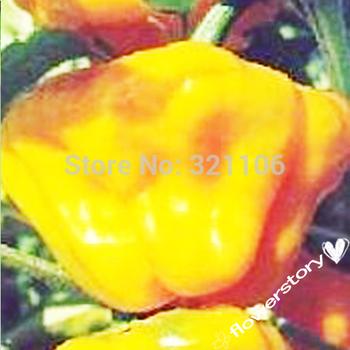 50  Yellow Scotch Bonnet Pepper 50 Seeds -----Free Shipping