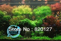 Free shipping 18 kinds mixed packing water grass Seeds; Aquarium water grass aquatic plants seeds, 10g/bag,about 3000pcs