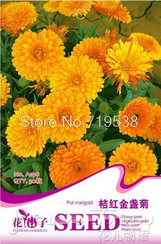 Calendula high quality flower bonsai seeds new arrival 30seeds a198(China (Mainland))