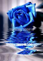 Diy diamond painting blue rose flower 3d cross stitch rhinestone pasted painting crystal diamond round diamond