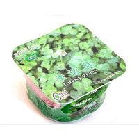 Fantastic odd grass Mini Pot DIY grass planting,Square Plastic Potted Grass Seeds FreeShipping