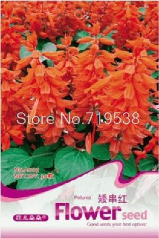 Red dwarf series bonsai seeds - squelchier red 30 seeds a009 flowers(China (Mainland))