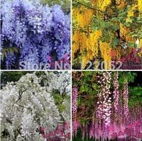20 pcs/bag hot selling Purple Wisteria Flower Seeds for DIY home garden
