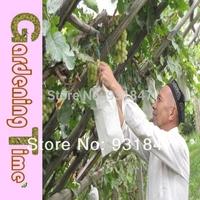 1000PCS 24*35CM Zipper Grape Paper Growing Bag, Grape Protection Bag Free Shipping