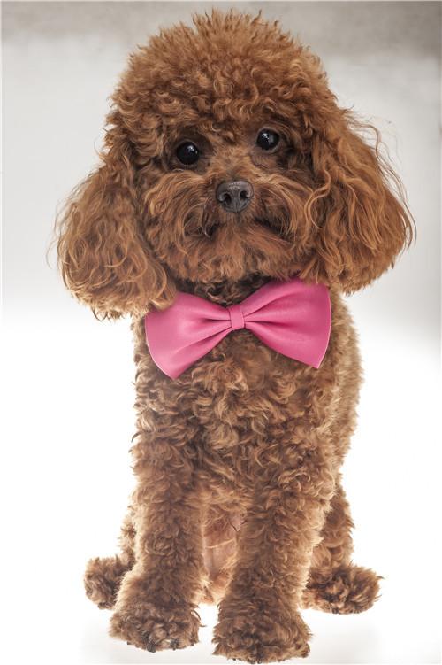 freeshipping Decorative collar dog pet bow tie multicolor(China (Mainland))