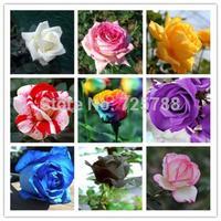 (This order include 9 packs each color 60 seeds)Rose seeds, garden supply, perfume bonsai, ghd, home & garden, home decor