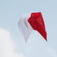 chinese various big polit kite