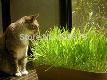 popular pet plant
