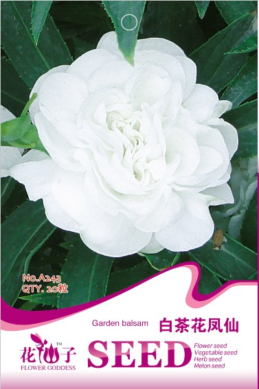 2013 seeds bag seeds white camellia impatiens finger flower 20 seeds a243(China (Mainland))