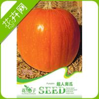 1 Pack 4 seeds Big Pumpkin Seeds