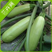 1 Pack 10 Seeds Pepo Vegetable Seeds