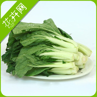 Chinese cabbage seeds four seasons vegetable seed sowing 200  seeds 29 seeds