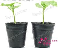 A lot(200 pcs)Nursery pot/Plastic nutrition cup/8*8cm/plastic nursery box/plastic nursery pots.nursery box.black plastic pot