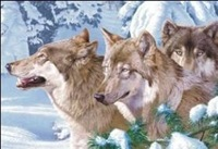 Factory Sales! HD Animals Wolf 30*40cm PET Lenticular 3D Picture, more than 300 design can be mixed, Free Shipping