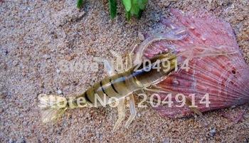 30pcs/lot 3.5g/6.5cm WITH SMELL High Quality Sea Fishing Sabiki Shrimp bait rigs baits Hooks Fishing lure