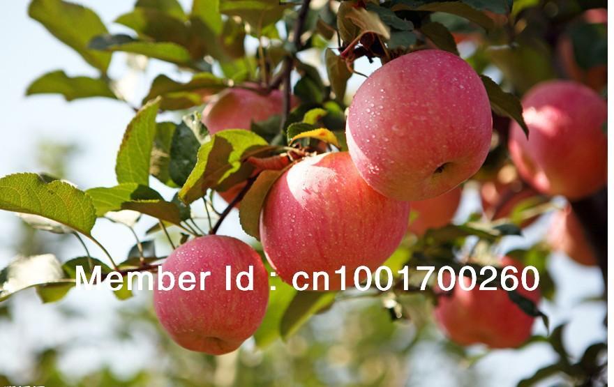 Fruiting Trees Plants Plant Seeds Fruit Tree