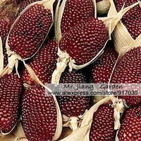 Strawberry Popcorn Seed * 1 Pack  ( 5  Seeds ) * Corn Seeds * Strawberry Zea Mays * Ruby Red Zea Mays * Vegetable