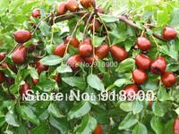 Free Shipping Chinese Xinjiang red Jujube , Premium red date , dried fruit 250G/bag, 1 bag/lot, dried fruit !