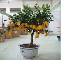 100 pcs / bag, bergamot seeds, flower seeds, bonsai cultivation, planting convenient